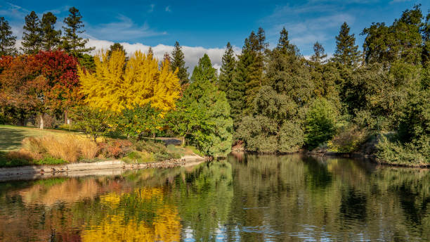 View of the UC Davis Arboretum During the Fall